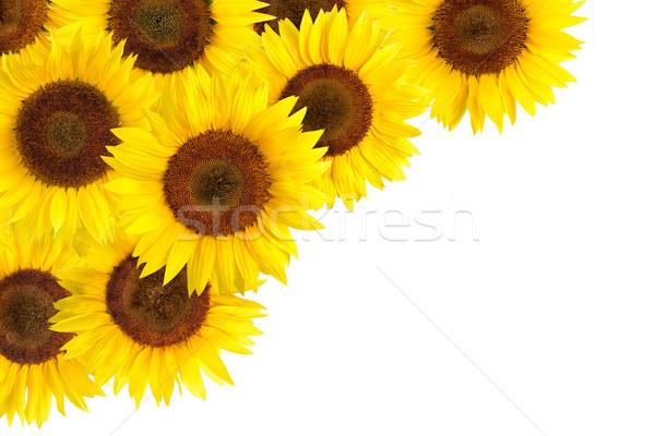 Zonnebloemen grens witte exemplaar ruimte heldere Stockfoto © Smileus