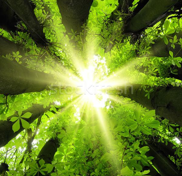 Stock photo: Sun shining through treetops