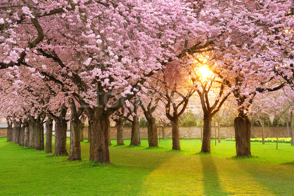 Fascinating springtime scenery Stock photo © Smileus