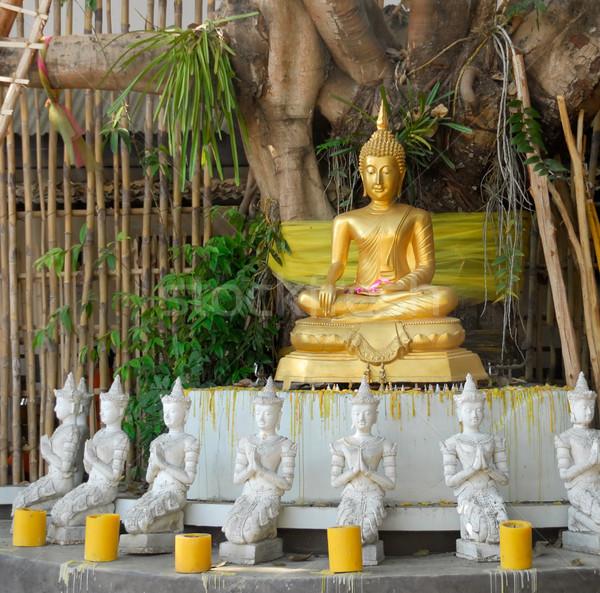 Будду дерево статуя впечатляющий тайский Сток-фото © Smileus