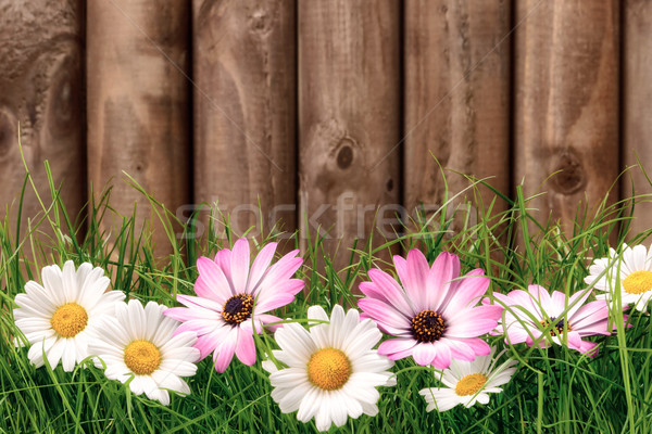 Flowers on grass in front of wooden fence Stock photo © Smileus