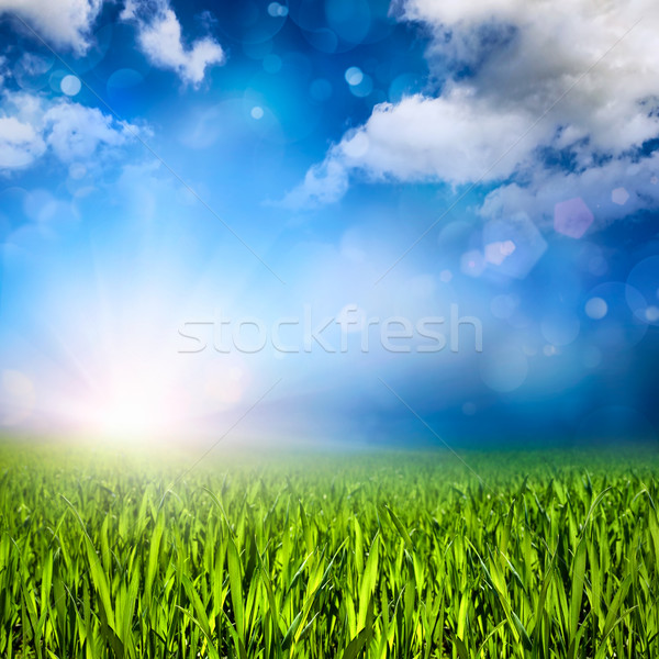 Sunlit grassland Stock photo © Smileus