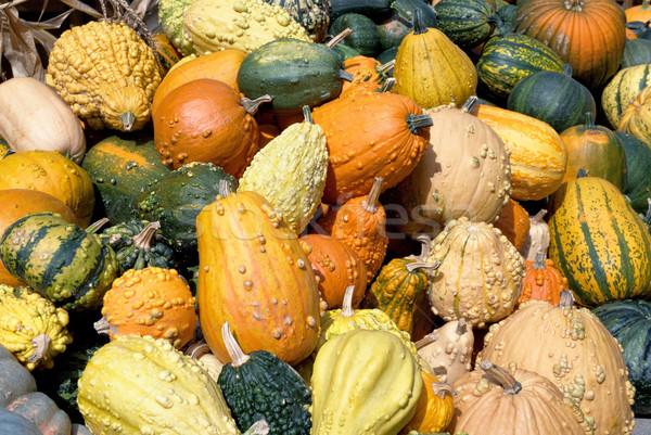 Variety of ornamental pumpkins Stock photo © Smileus