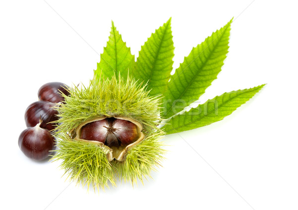 Fresh chestnuts with green leaves, isolated Stock photo © Smileus