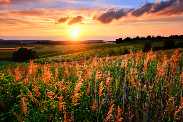 The setting sun paints the sky and vegetation red Stock photo © Smileus