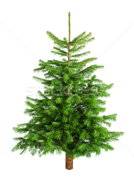 природного мало рождественская елка украшения свежие Сток-фото © Smileus