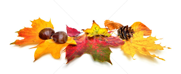 Autumn leaves and chestnuts on white Stock photo © Smileus