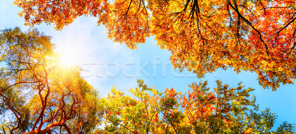 The autumn sun shining through golden treetops Stock photo © Smileus