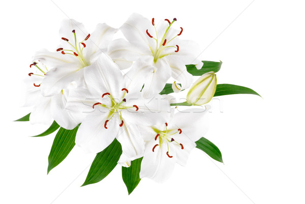 Bunch of large white lilies isolated Stock photo © Smileus
