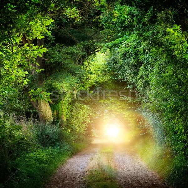 Tunnel of trees leading to light Stock photo © Smileus