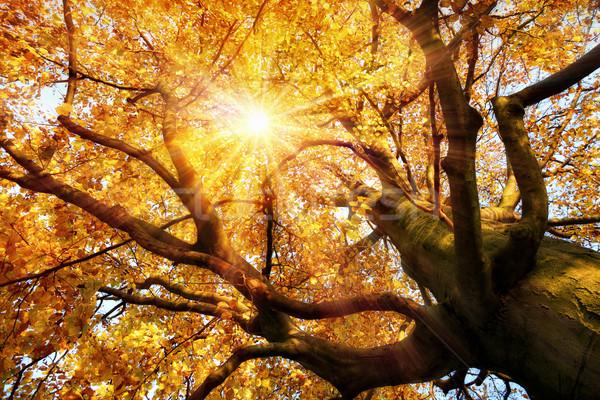 Magnífico outono cenário sol brilhante belo Foto stock © Smileus