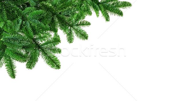 Bujny jodła biały studio odizolowany rogu Zdjęcia stock © Smileus