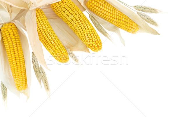 кукурузы пшеницы границе белый природного ушки Сток-фото © Smileus