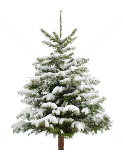 Perfect little Christmas tree in snow Stock photo © Smileus