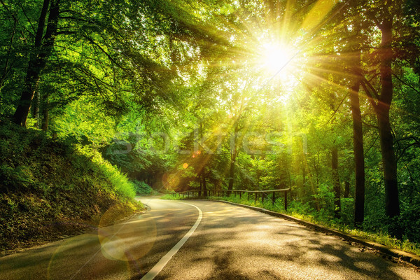 Scenic road in a forest Stock photo © Smileus