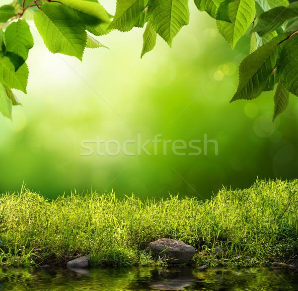Green nature background Stock photo © Smileus