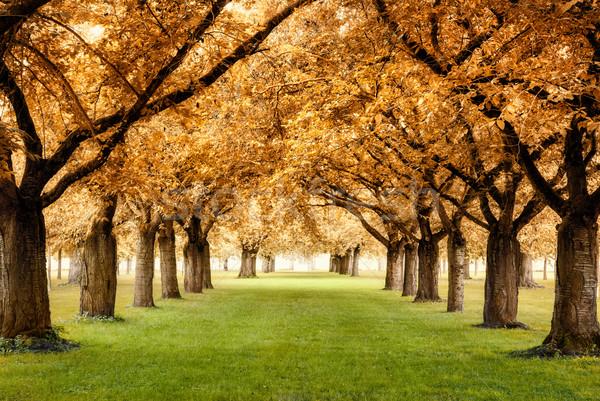 Magnífico paisaje parque hermosa Foto stock © Smileus
