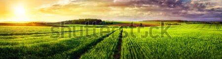 Rural landscape sunset panorama Stock photo © Smileus