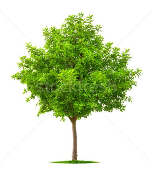 Young tree isolated on white Stock photo © Smileus