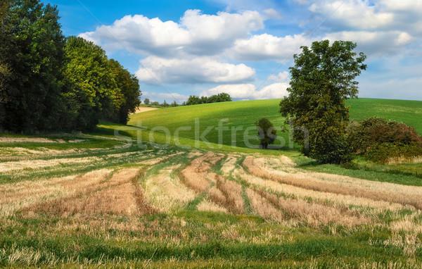 Idyllisch velden heuvels blauwe hemel Stockfoto © Smileus