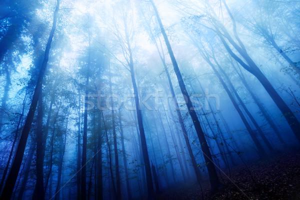 Blue twilight mood in a foggy wood Stock photo © Smileus