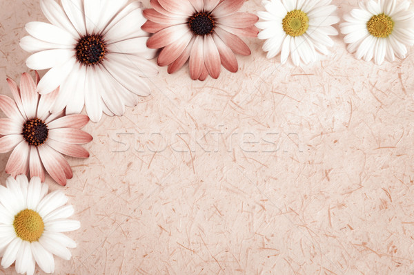 Parchment background framed with flowers Stock photo © Smileus