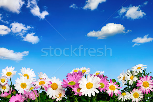 Flower bed and blue sky Stock photo © Smileus