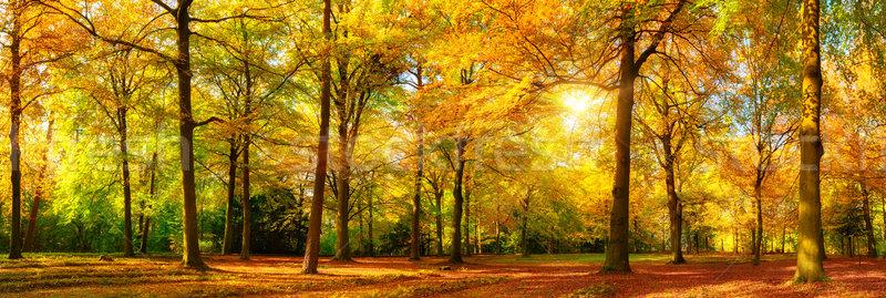 Gorgeous autumn panorama of a sunny forest Stock photo © Smileus