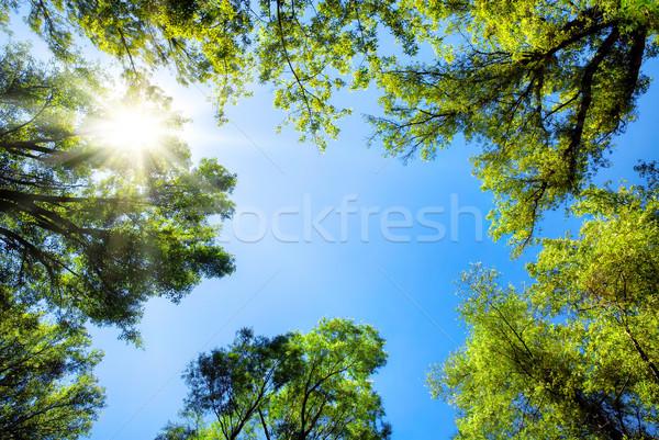 Güneşli mavi gökyüzü ağaçlar güneş Stok fotoğraf © Smileus