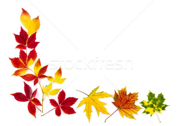 Colorful autumn leaves frame Stock photo © Smileus