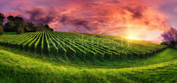 Foto stock: Vina · panorama · magnífico · puesta · de · sol · paisaje · colina