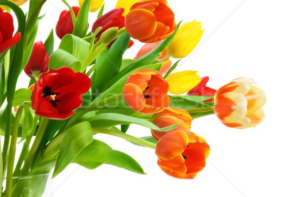 Colorful bouquet of tulips on white Stock photo © Smileus