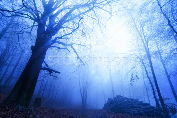 Cool mood in a foggy wood Stock photo © Smileus