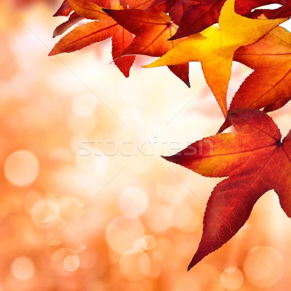 осень листьев квадратный bokeh украшенный красочный Сток-фото © Smileus