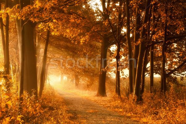Altın sonbahar güneş ışınları puslu yaprak döken ağaçlar Stok fotoğraf © Smileus