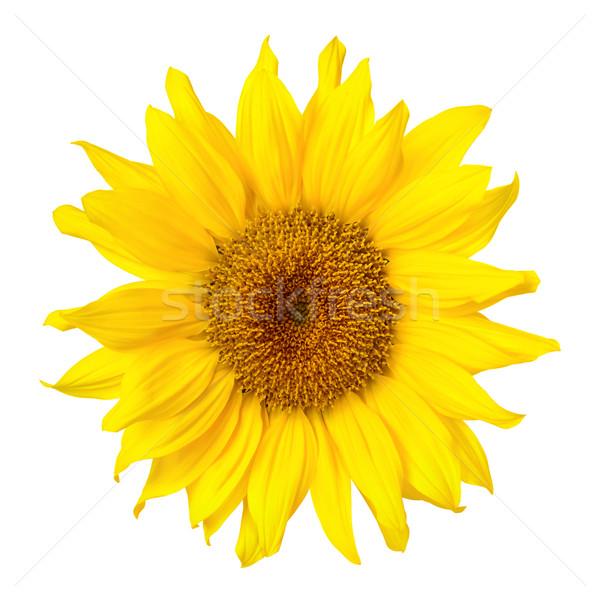 Prachtig zonnebloem witte heldere schone Stockfoto © Smileus