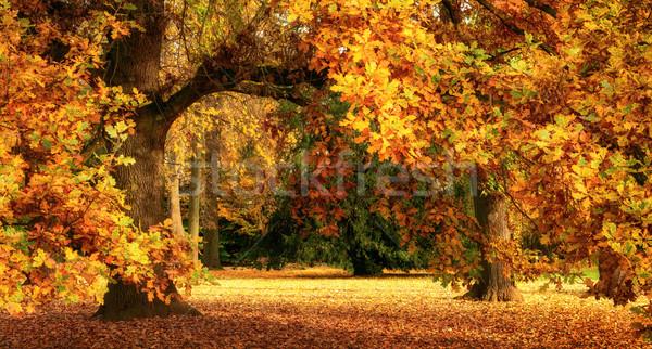 ősz díszlet fenséges tölgyfa nyugalmas mutat Stock fotó © Smileus