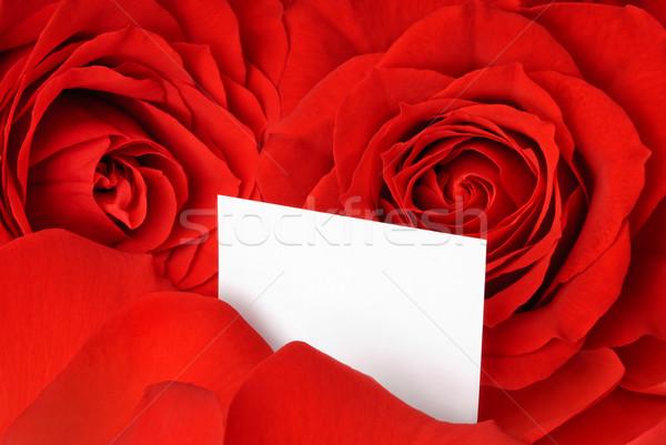 Red roses płatki przepiękny pusty Zdjęcia stock © Smileus