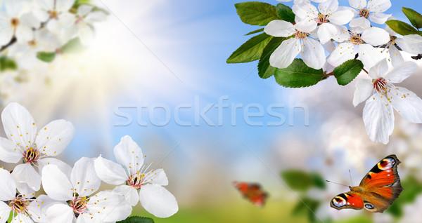 Wiosna raj biały wiosną kwiaty jasne Zdjęcia stock © Smileus