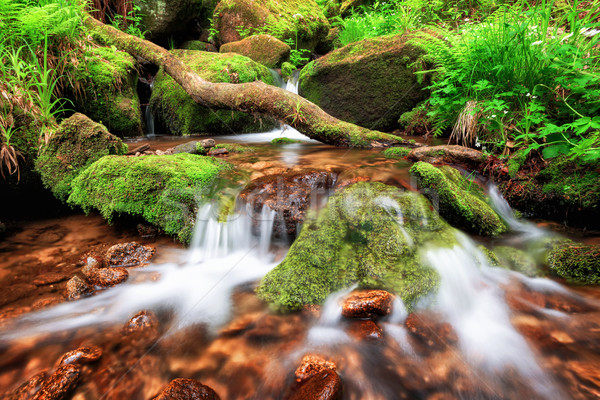 Stream gently cascading down a mountain forest Stock photo © Smileus