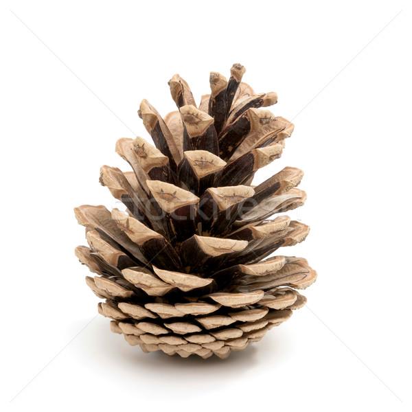 Pine cone on white Stock photo © Smileus