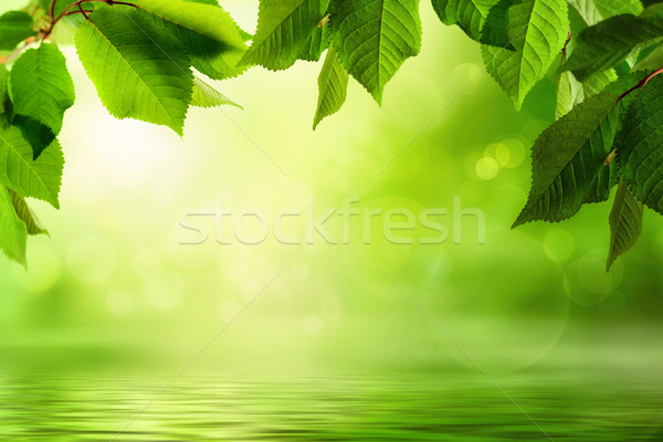 Stock photo: Greenery and water background