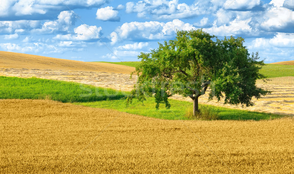 Colorful rural landscape with single tree Stock photo © Smileus