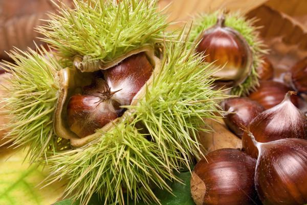 świeże schludny pozostawia otwarte drzewo Zdjęcia stock © Smileus
