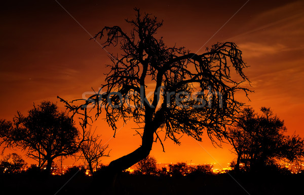 Silhouettes of trees over the red sky Stock photo © Smileus