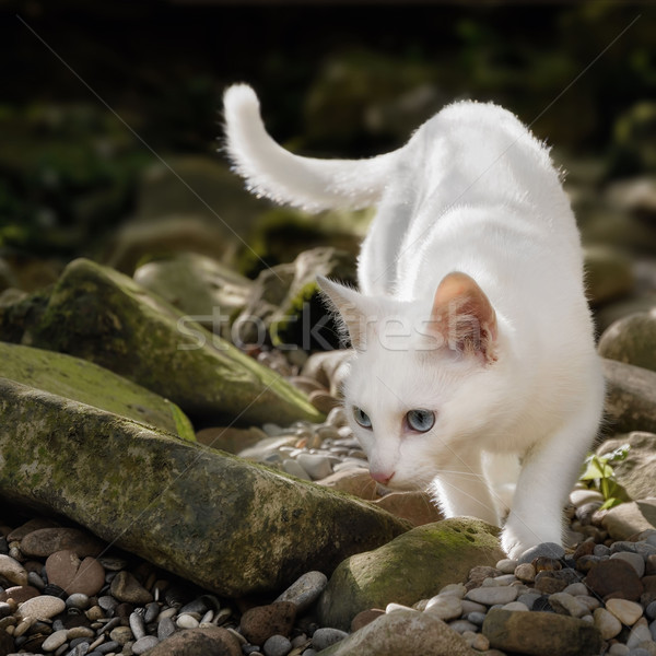 White cat in free nature Stock photo © Smileus