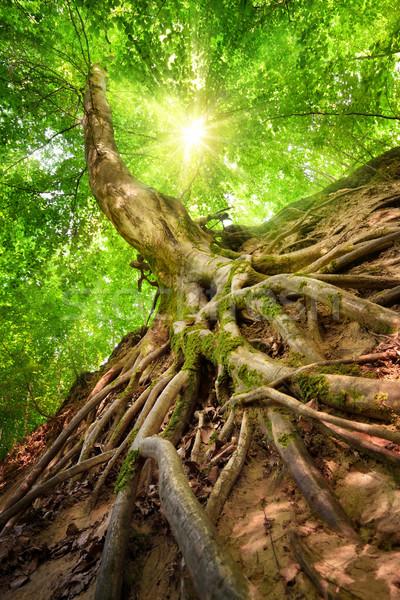 лес декораций красивой Sunshine глаза мнение Сток-фото © Smileus