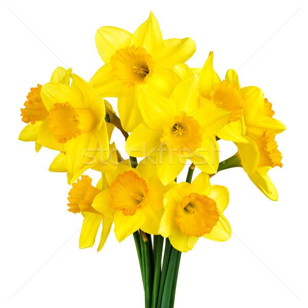 開花 水仙 孤立した 白 明るい ストックフォト © Smileus