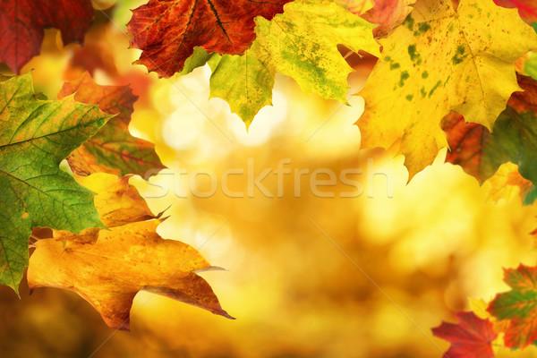Autumn leaves framing a nice bokeh background Stock photo © Smileus