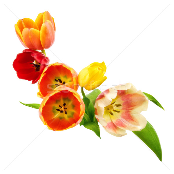 Tulips arrangement Stock photo © Smileus